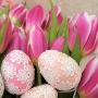tulips-3113969_960_720